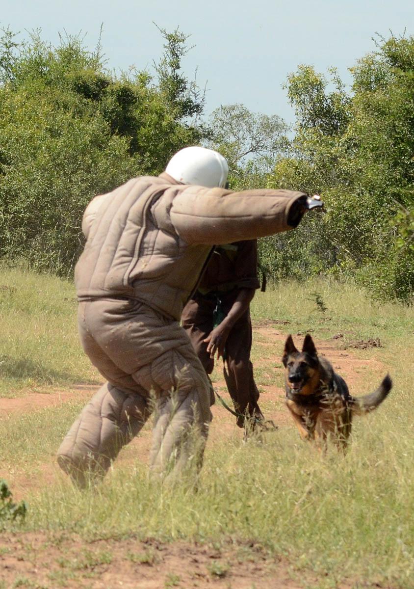 AP dog training Mkhaya Swazi 040314 WRK 454 low res