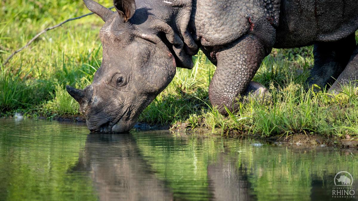 GOH rhino in Manas NP, Jeremy Dwyer-Lindgren, Woodland Park Zoo