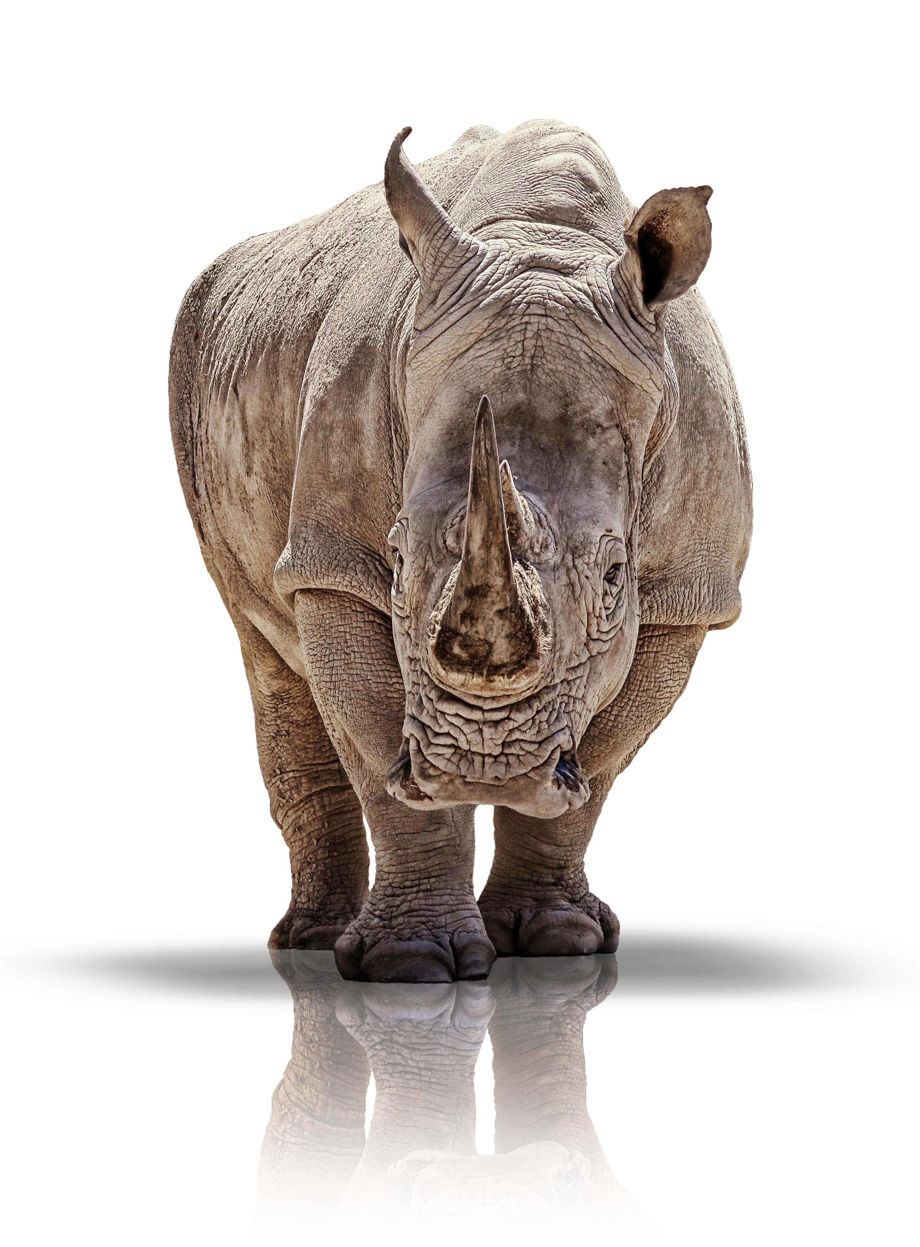 http://www.dreamstime.com/stock-photos-white-rhino-image27988293