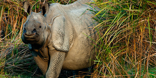 indian-rhino-newsletter-2