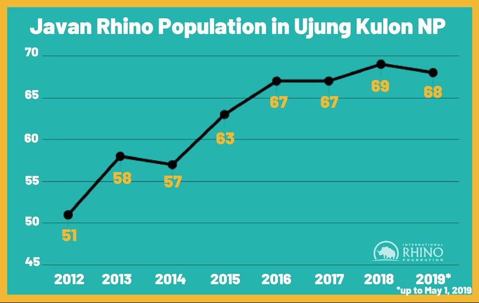 Javan Rhino Population in Ujung Kulon NP (4)