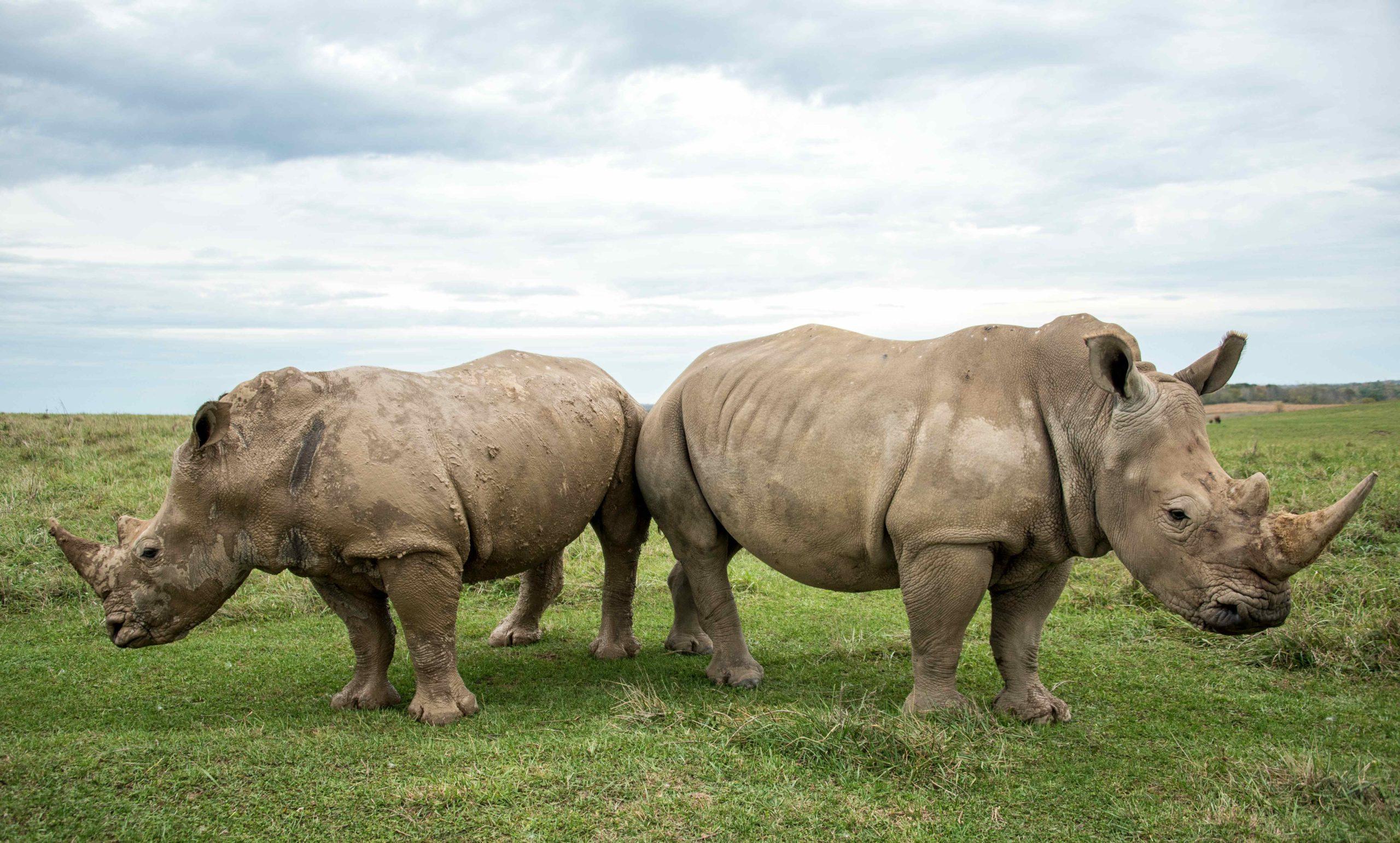 John Zorn | Rhino