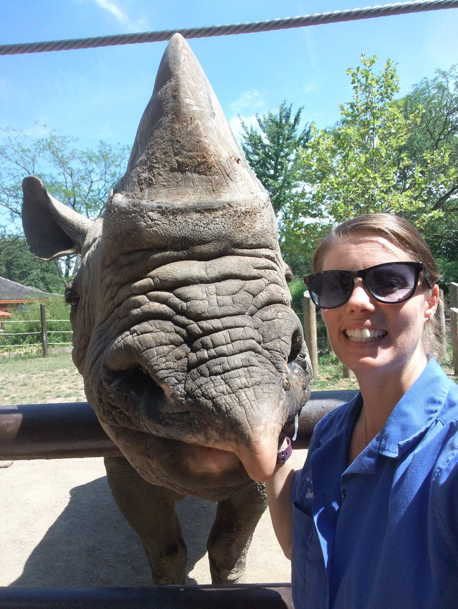 Black rhino Rosie at the Columbus Zoo with zookeeper, trainer