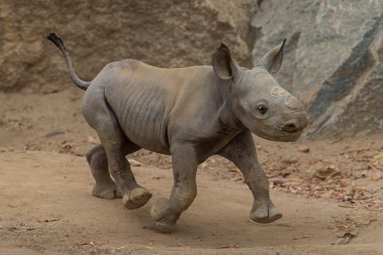 Photo courtesy of San Diego Zoo Global.
